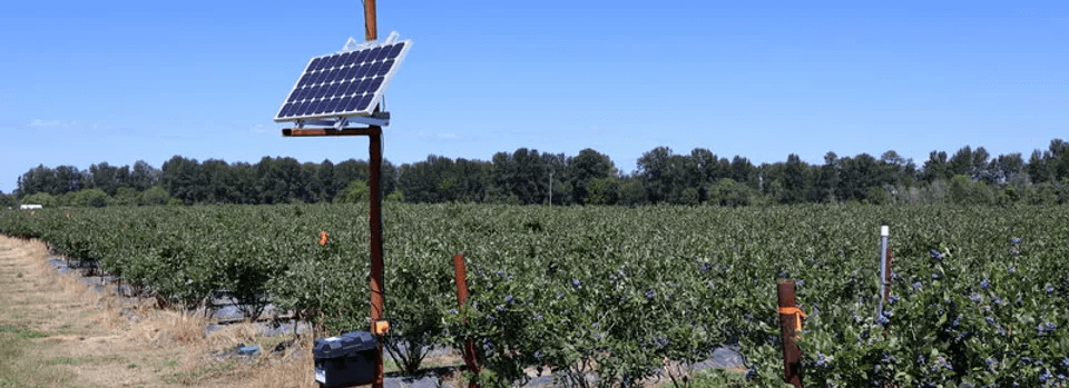 Automated Bird Lasers The Most Effective Bird Exclusion Technology Available