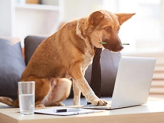 Working with Dogs: Better Noses, Cuter Faces